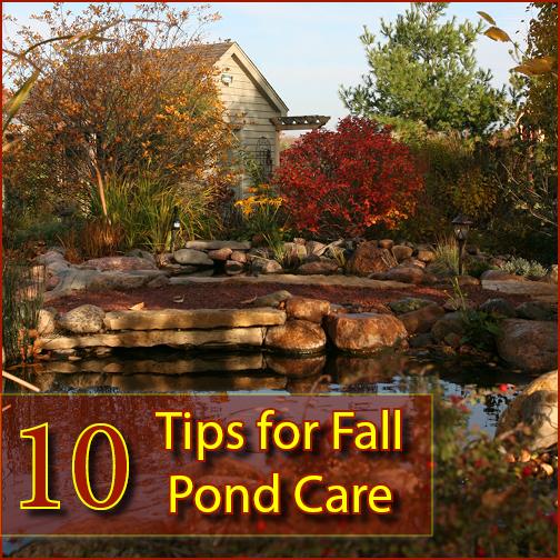 10 Tips For Fall Pond Care Aquascape Inc