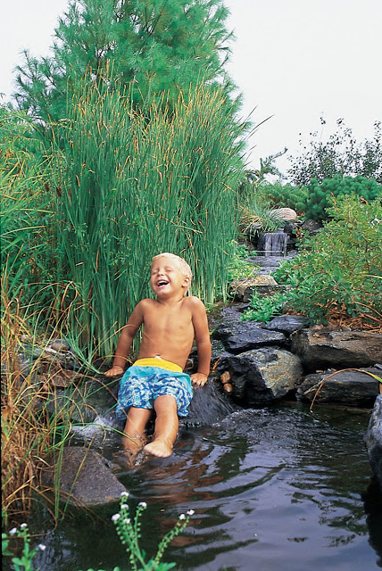 Water gardens are truly a unique way to unite the family and enjoy the splendor of our wonderful planet.