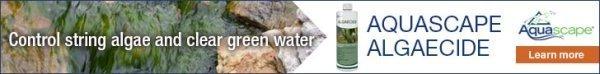 Eliminate Pond Algae with Aquascape Algaecide