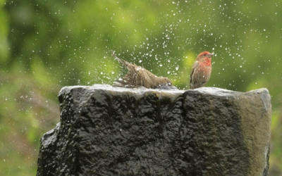 Birds-in-Fountain
