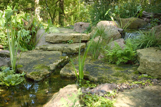 The greens of moss, ferns and architectural grasses reflect light stealing through the leafy canopy above in this water feature.