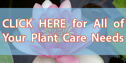 CLICK HERE for All of Your Plant Care Needs