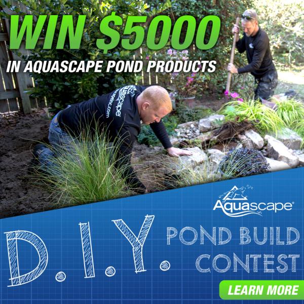 DIY Pond Contest 1080x1080