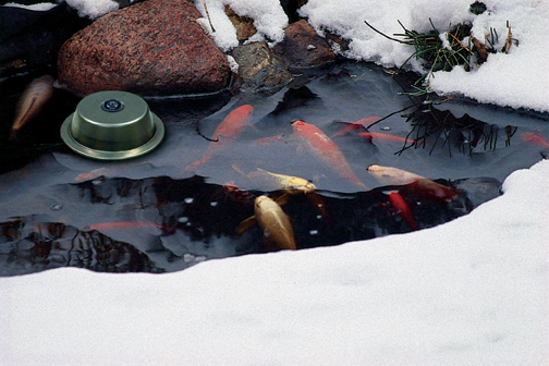 The Aquascape Pond De-Icer prevents winter fish loss by keeping a hole open in the ice during the cold winter months.
