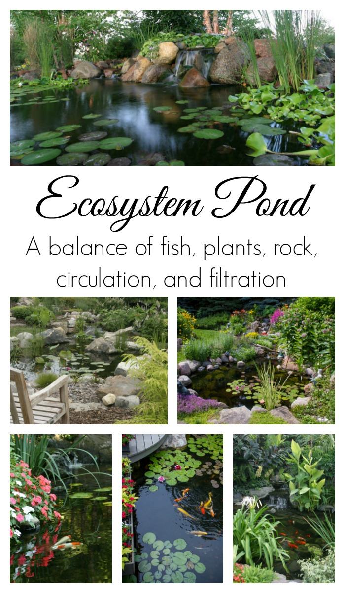 An ecosystem pond may be the perfect option for you when choosing the perfect water feature for your yard!