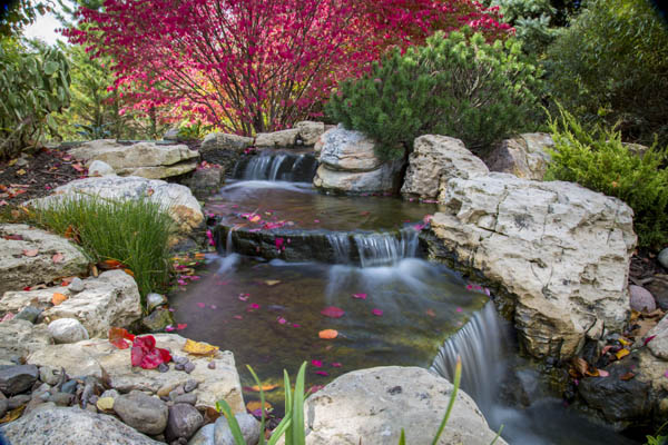 Pond and Waterfall with Burning Bush