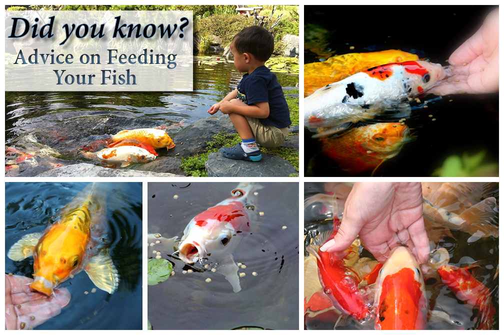 Feeding Fish in the Fall