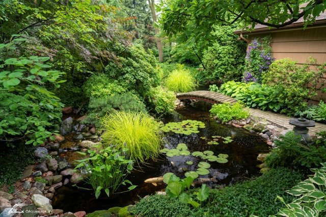 Garden Pond with Koi and Wooden Bridge