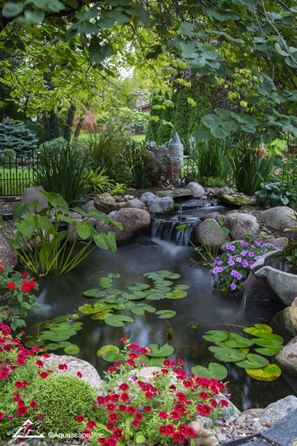Backyard Pond with Water Lilies
