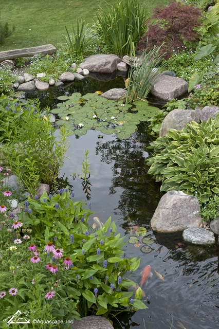 Water Garden with Water Lilies and Koi