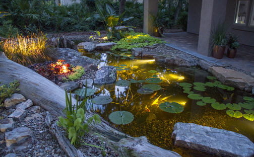 Lit up Pond - Aquascape
