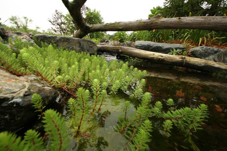 Do You Know Your Aquatic Plants Aquascape Inc