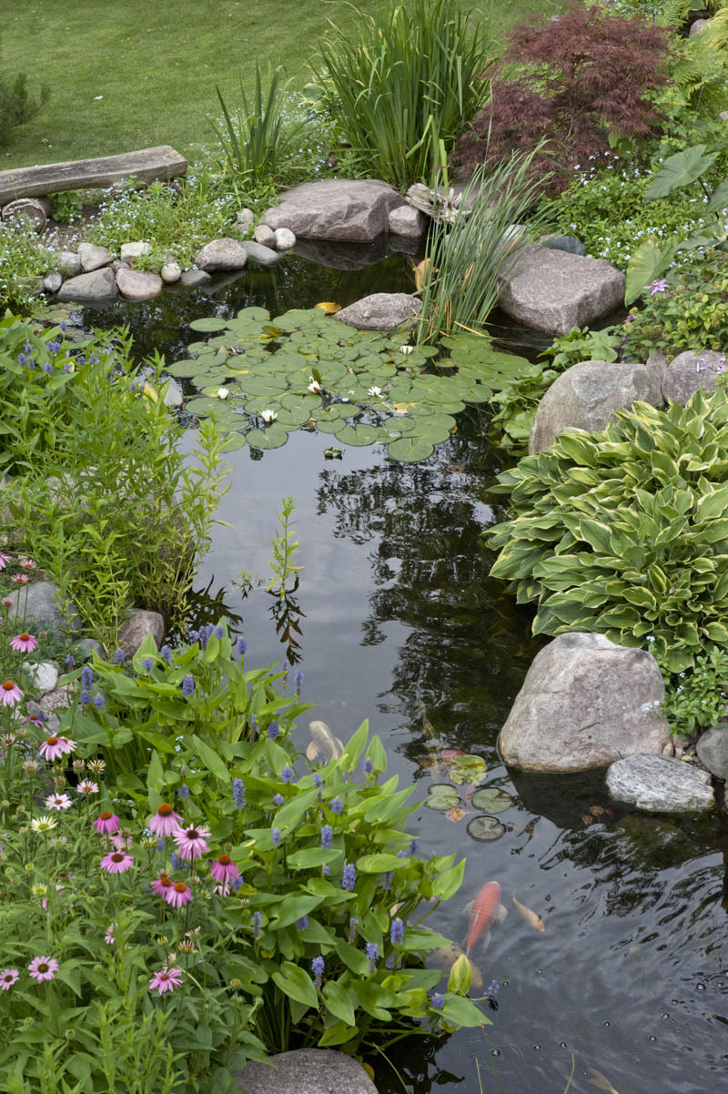 Landscape edging ideas for water features aquascape inc for Plants to put in pond