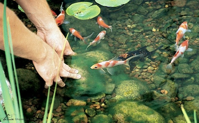 How to Treat and Control Pond Algae