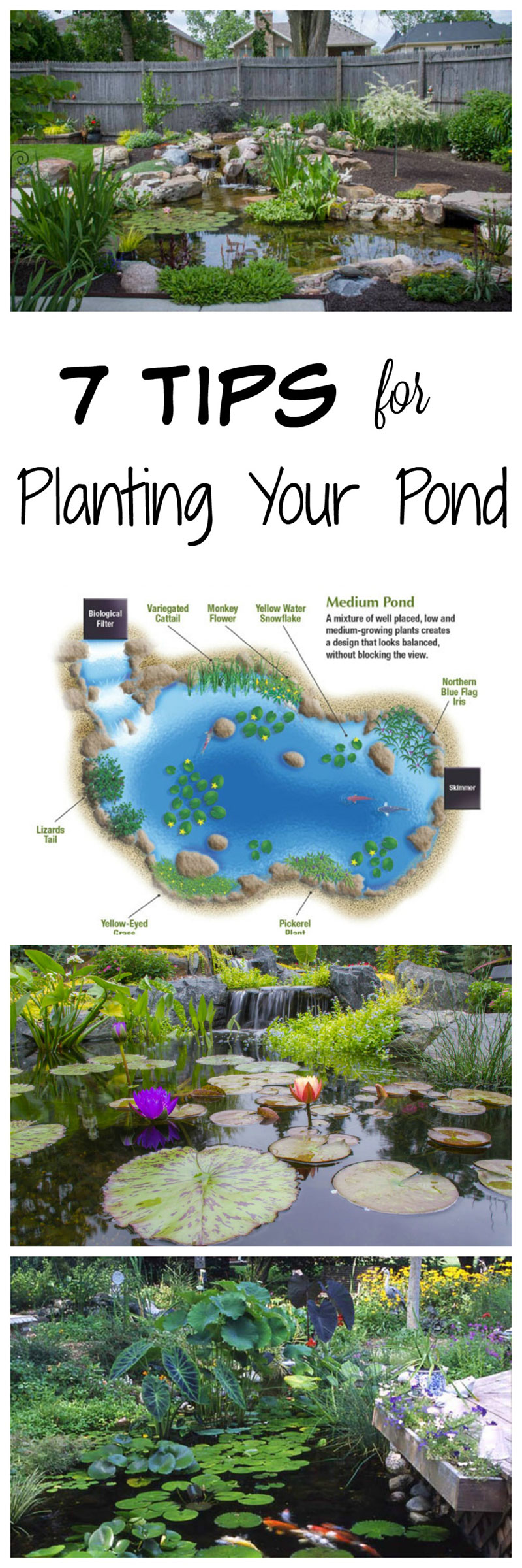 7 tips for planting your pond water gardens water for Garden pond advice