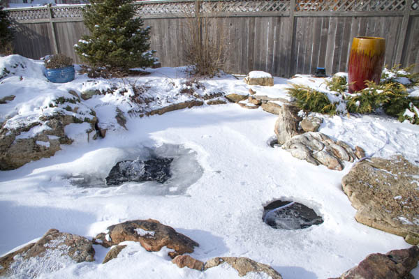 Winter pond fish care how to care for pond fish for Koi pond maintenance near me