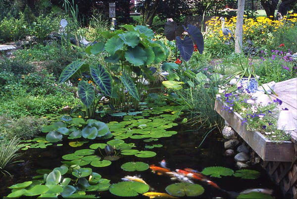 7 tips for planting your pond water gardens water for Plants for around garden ponds