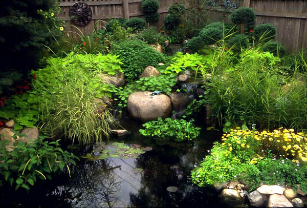 Green Plants in Pond