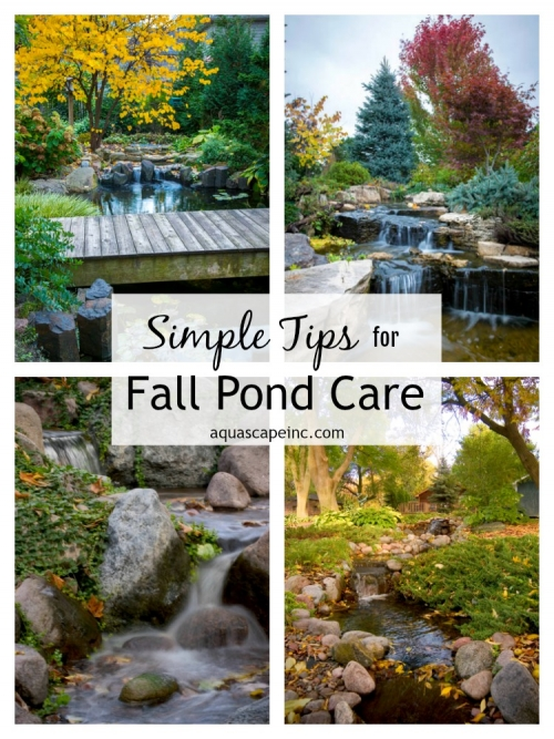 Simple Tips for Fall Pond Care