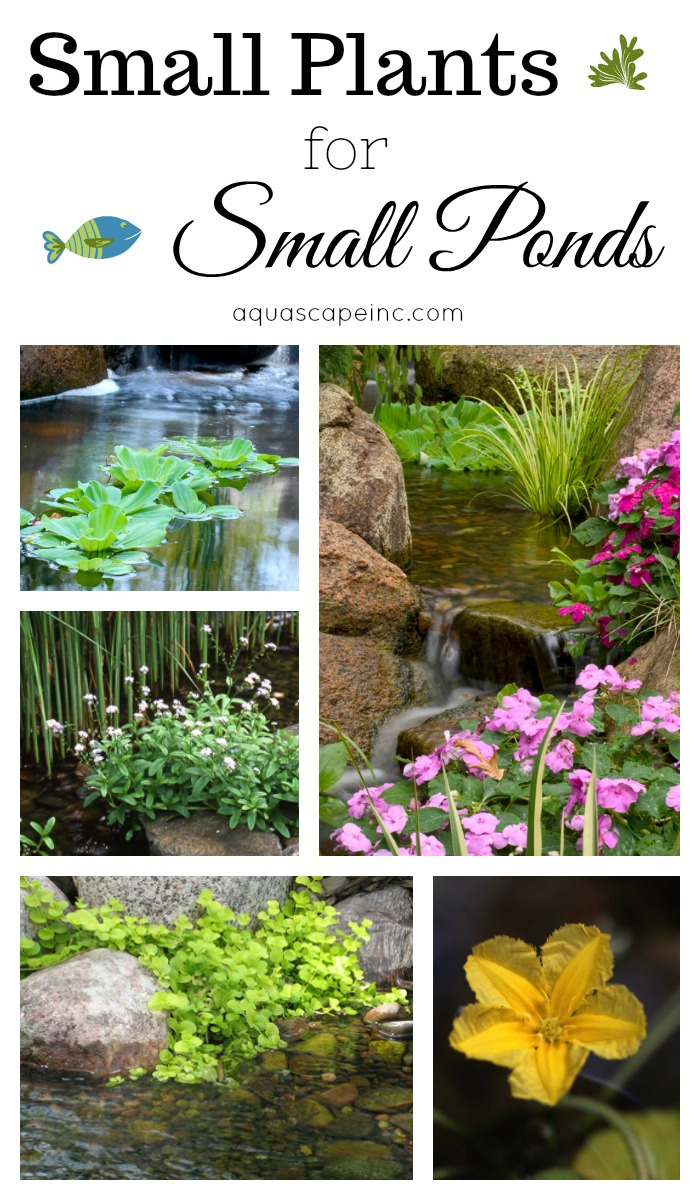 Small Plants for Small Ponds