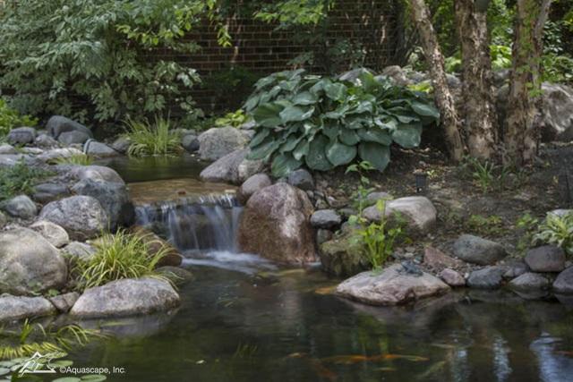 Springtime Pond Changes