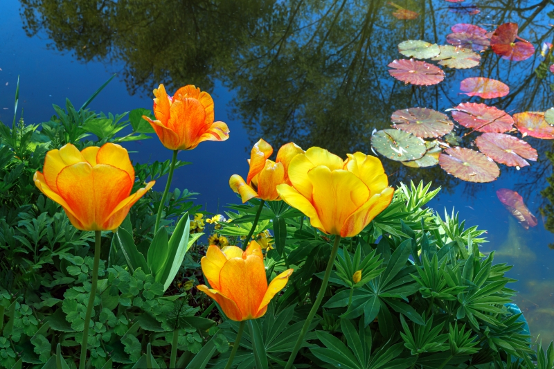 Springtime Pond - changes you should know about