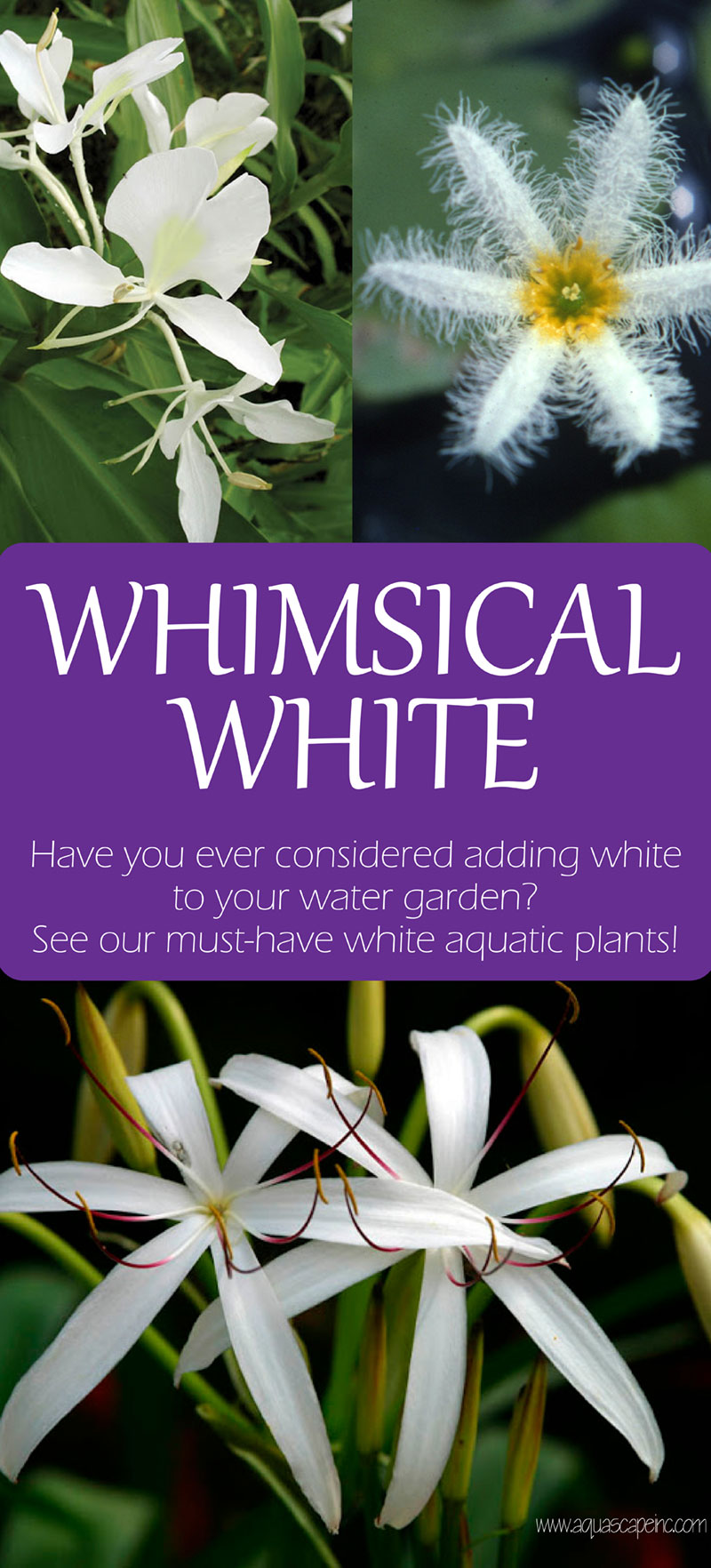 White Aquatic Plants for Your Water Garden