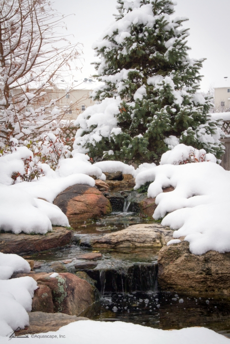 Waterfall in Winter Flowing into Koi Pond