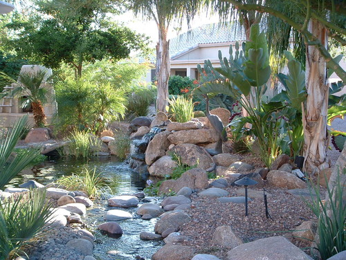 Unique vegetation creates contemporary landscape design by Phoenix Landscape Contractor, The Pond Gnome