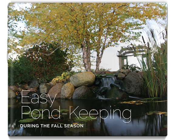 easy pond keeping during the fall season