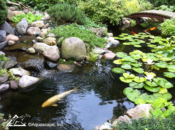 Healthy Summertime Pond