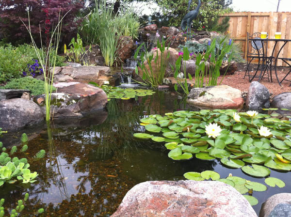 7 tips for planting your pond water gardens water for Garden pool ecosystem