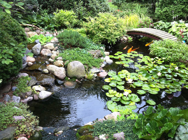 An arching bridge peeks out from the foliage of this water feature to provide safe crossing and a vantage point for our koi friends.