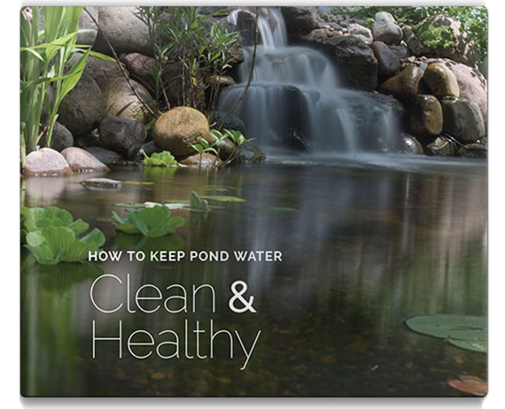 how to keep pond water clean and healthy