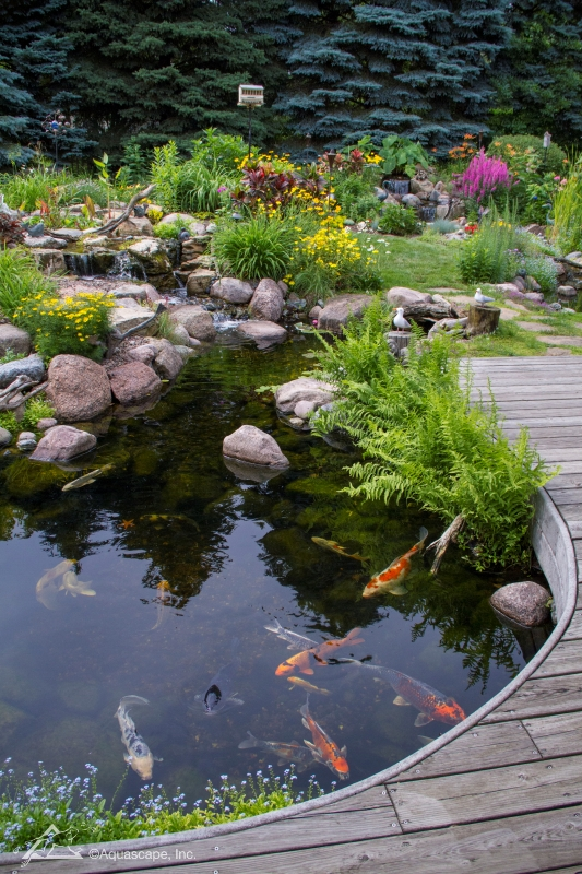 Koi Pond with Plants and Deck