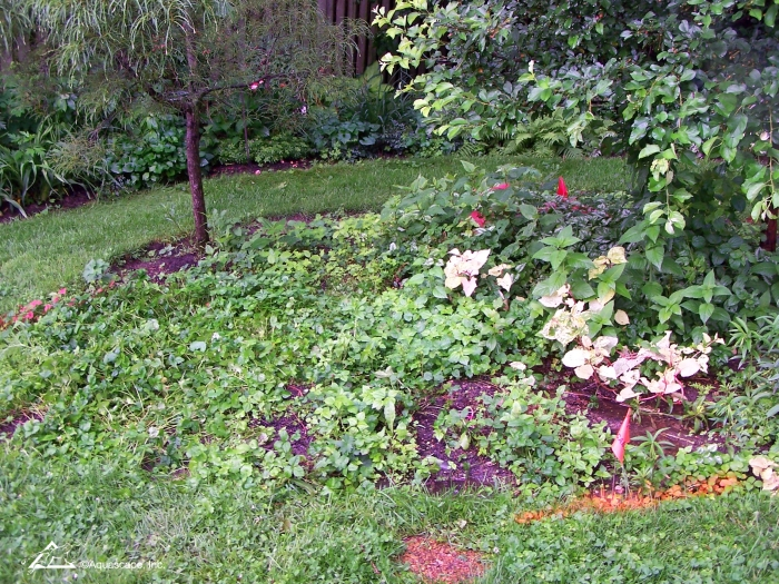 Unused portion of backyard not suitable for pond