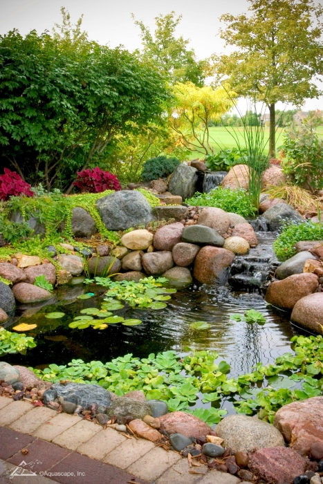 Small backyard koi pond with waterfall