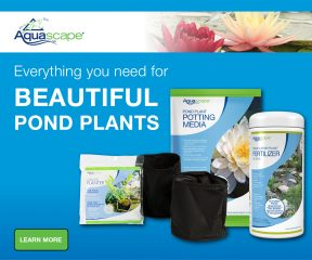 Pond Plant Care and Supplies
