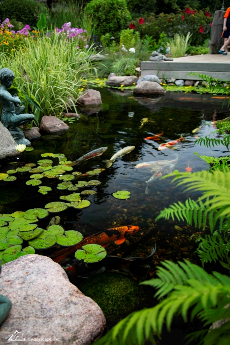 Backyard Koi Pond with Ferns and Waterlilies