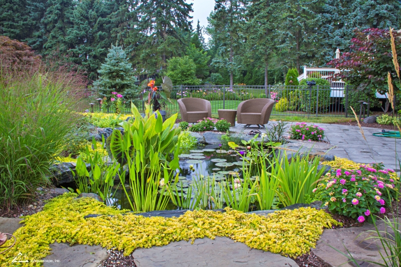 Garden Pond with Variety of Aquatic Plants